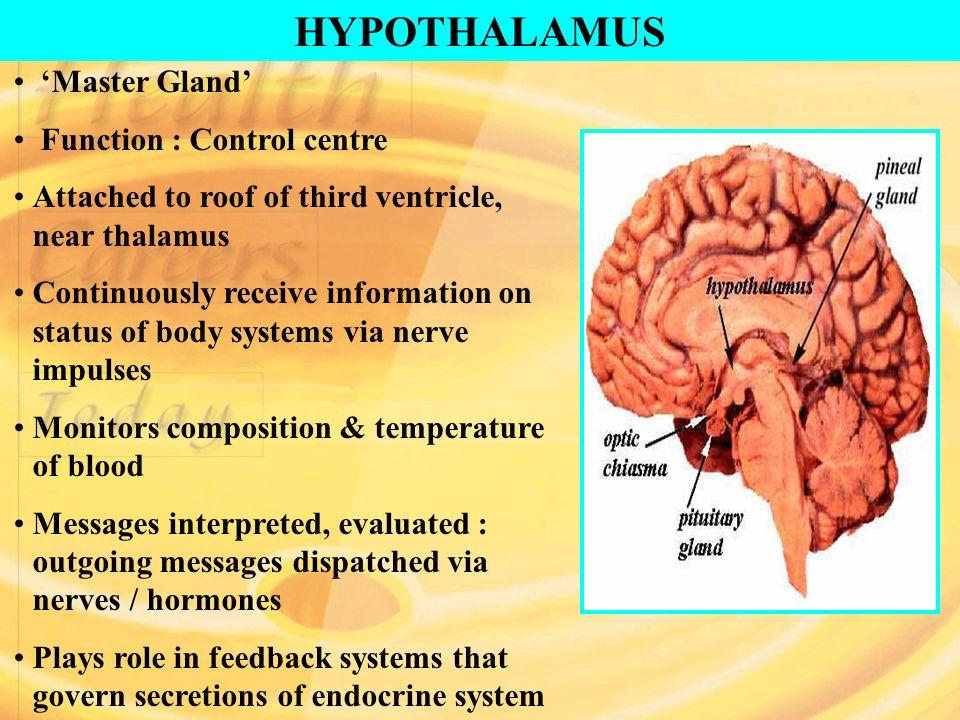 hypothalamus abnehmen