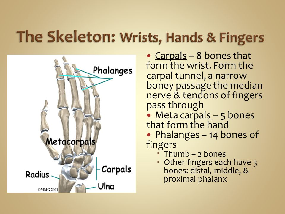 Skeletal System Connecting the Body. - ppt video online download