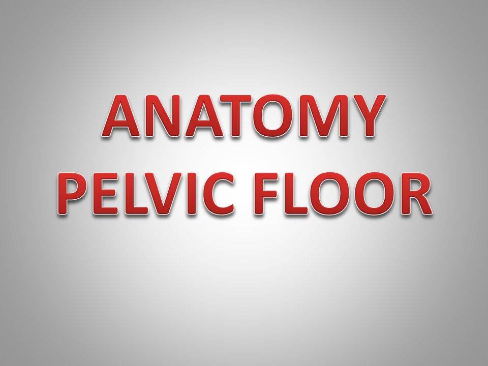 ANATOMY PELVIC FLOOR.