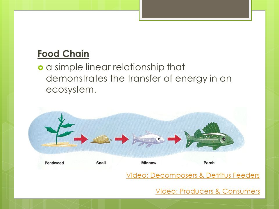 the relationship among different food chains in an ecosystem is a