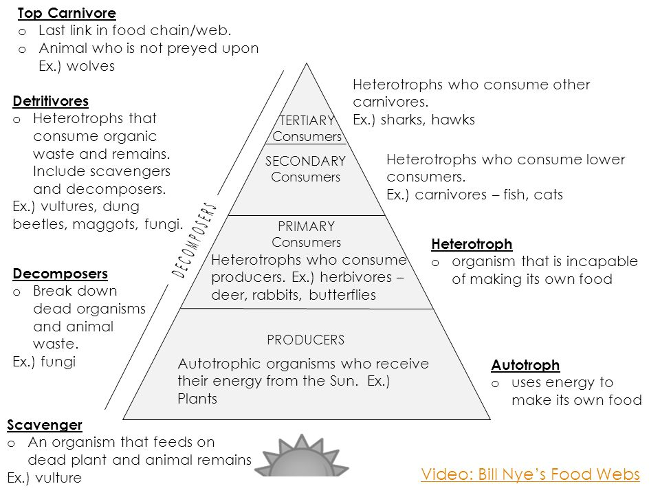 Dynamics Of Ecosystems Ppt Download