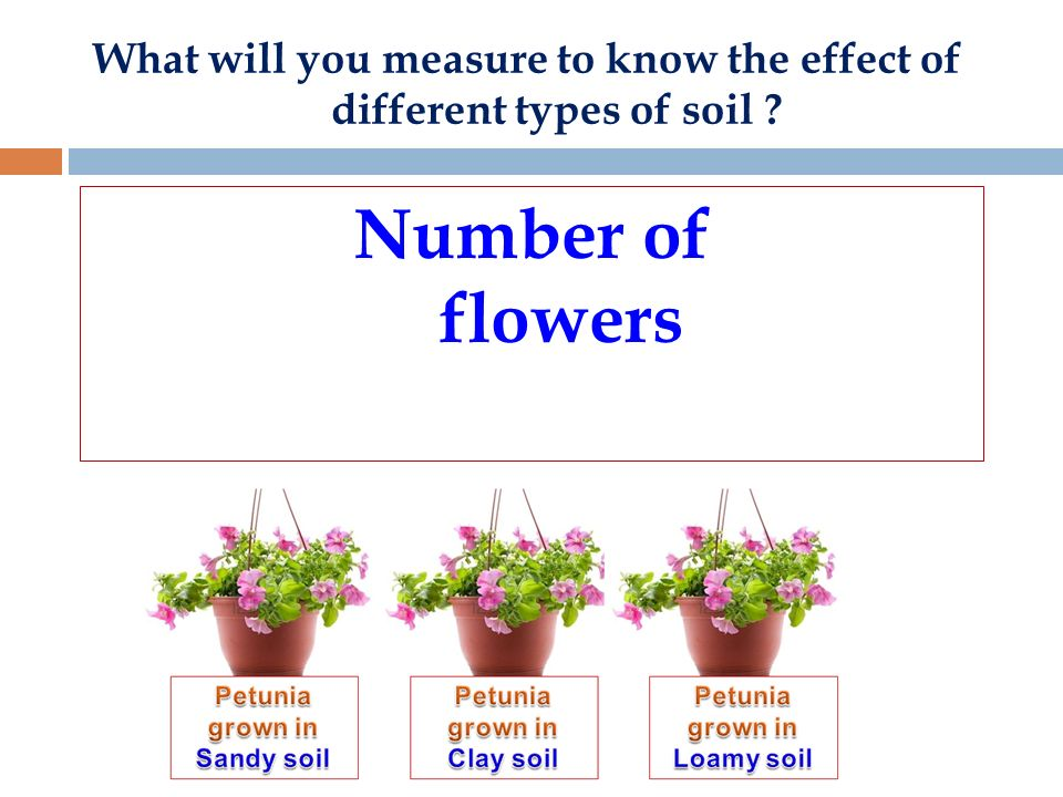 the effect of different soil types Plants rely on 13 mineral nutrients found in soil to survive and grow therefore, the type of soil used for a plant directly affects its growth if there are not enough nutrients in the soil for a.