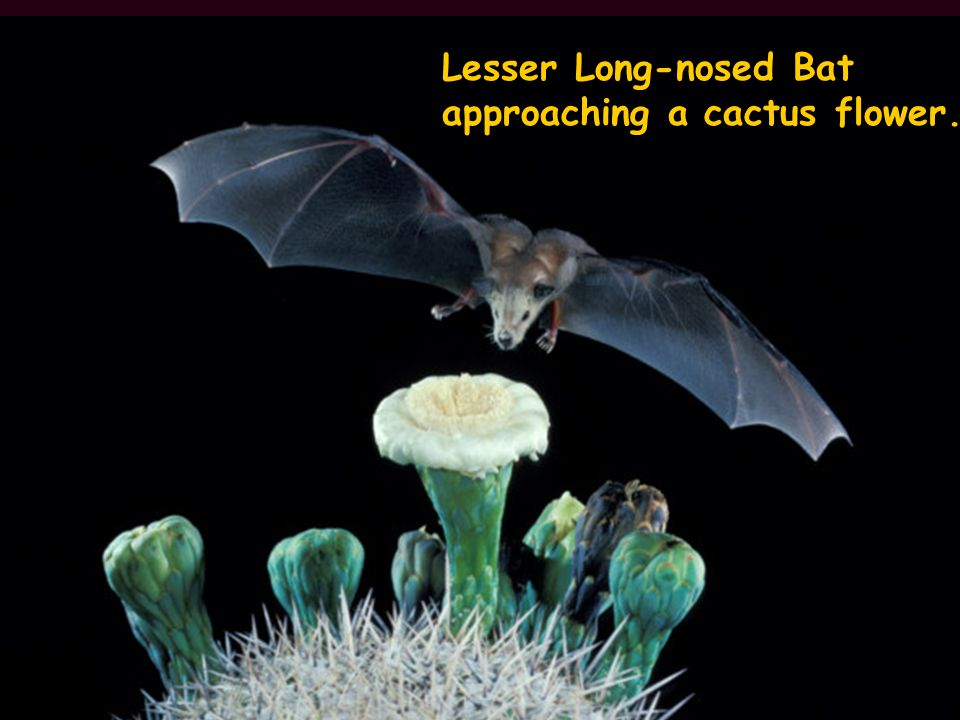 Are You Batty Are You Batty Different Kinds Of Bats In