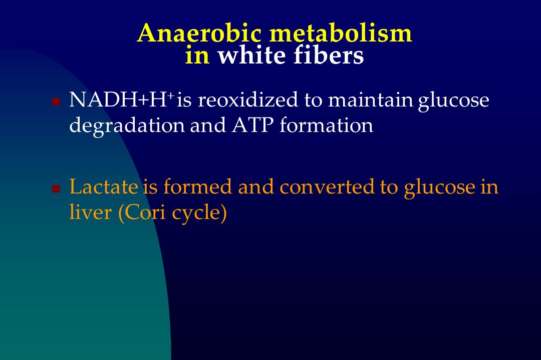 Anaerobic metabolism in white fibers