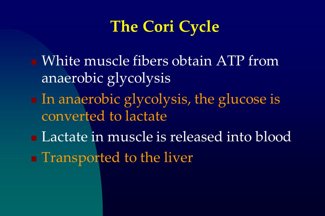 The Cori Cycle White muscle fibers obtain ATP from anaerobic glycolysis. In anaerobic glycolysis, the glucose is converted to lactate.