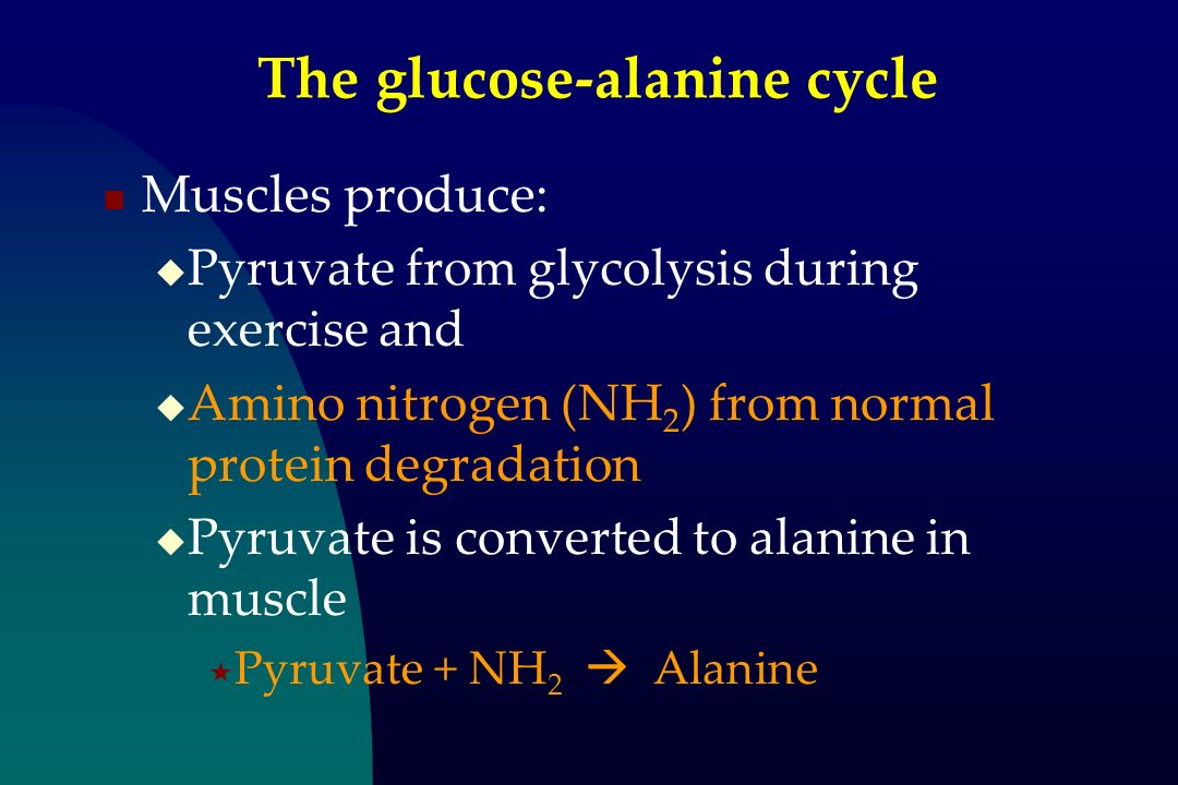 The glucose-alanine cycle