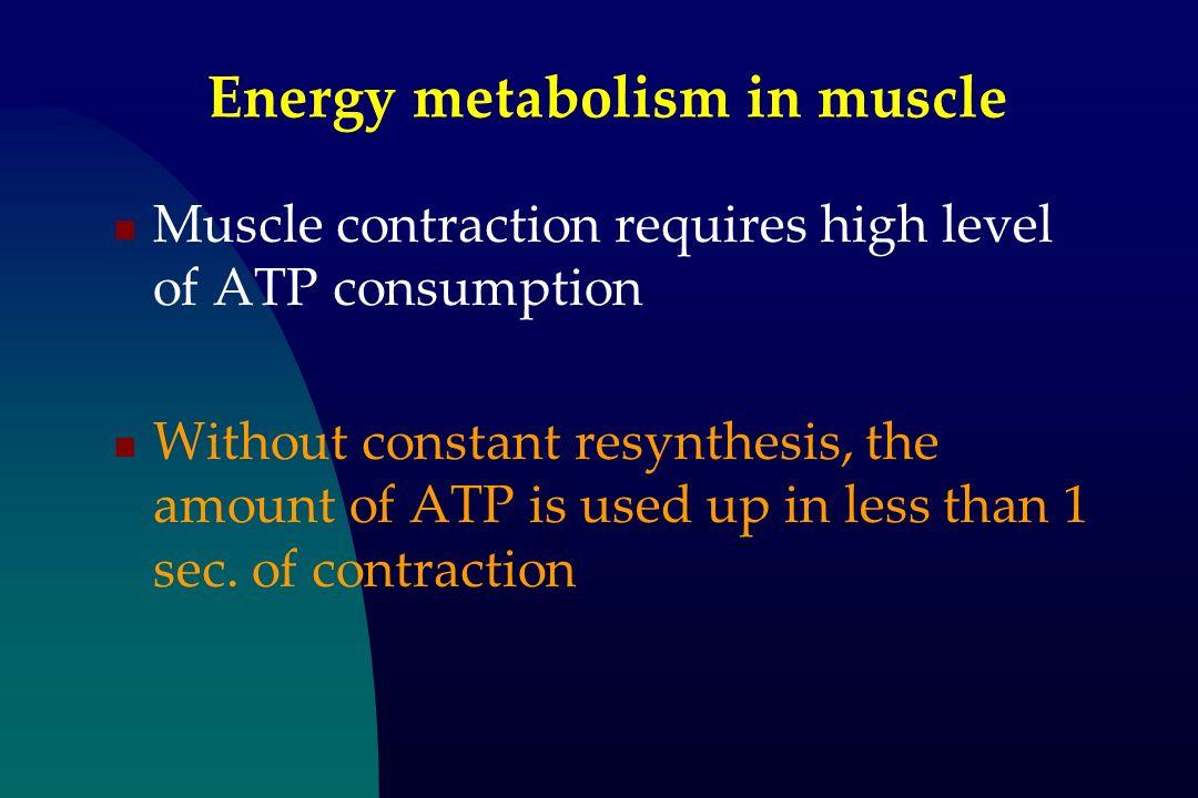 Energy metabolism in muscle