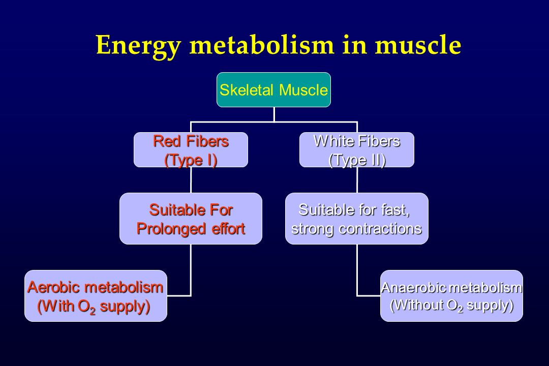 Energy metabolism in muscle