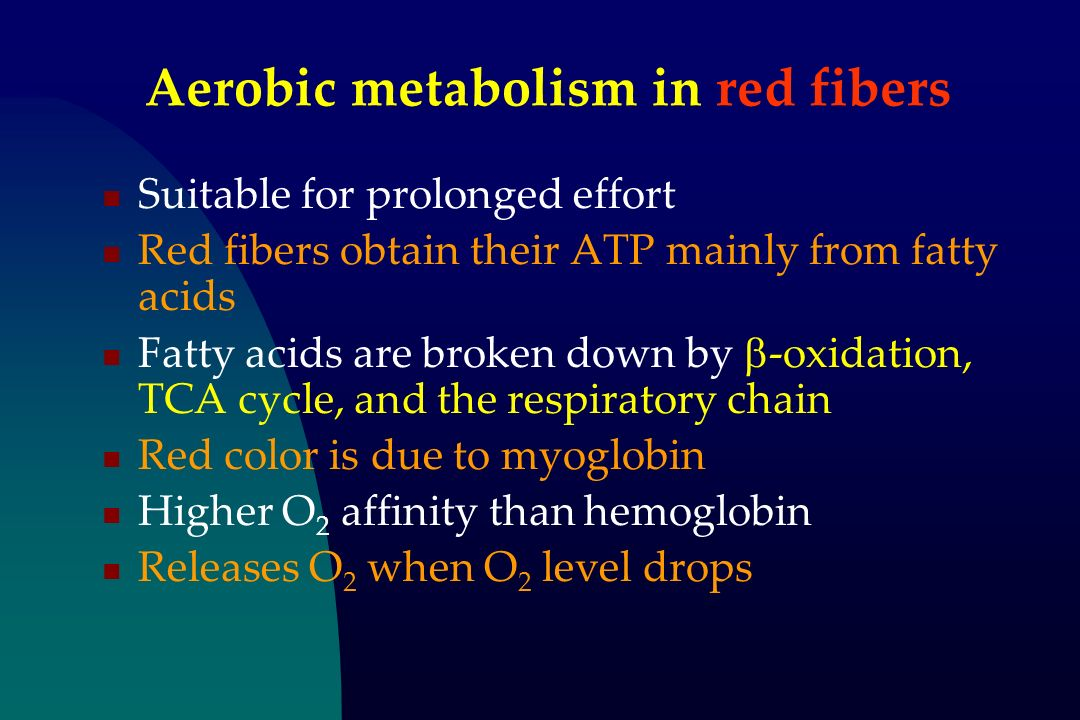 Aerobic metabolism in red fibers