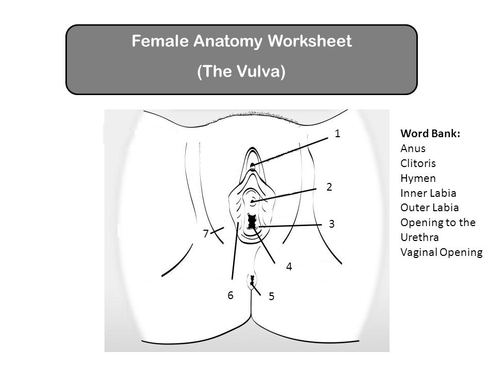 Outer Female Anatomy Image collections - human body anatomy