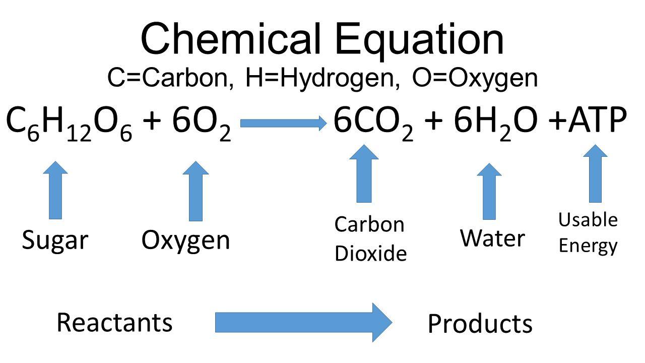 Image result for cellular respiration equation