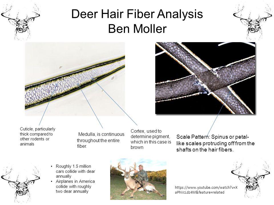 Animal Hair Slides Fall Ppt Video Online Download