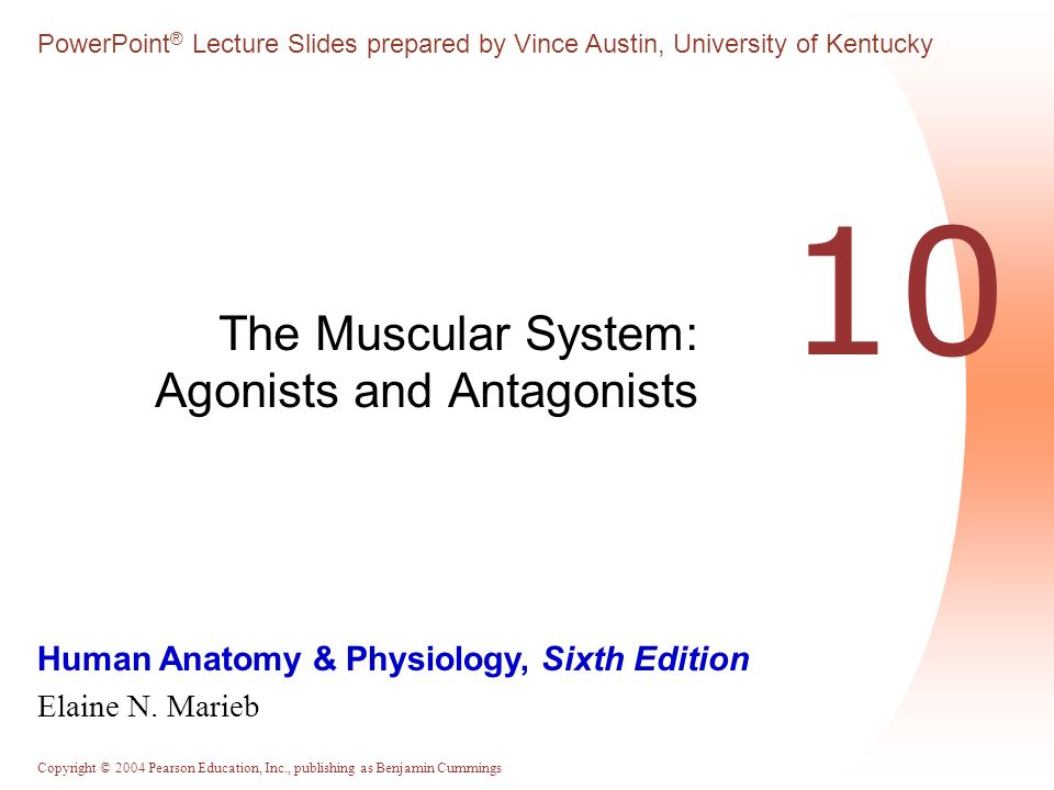 The Muscular System: Agonists and Antagonists - ppt video online ...