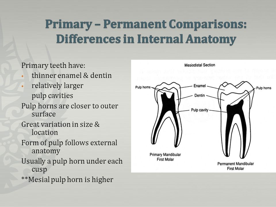 molar relationship in primary dentition anatomy