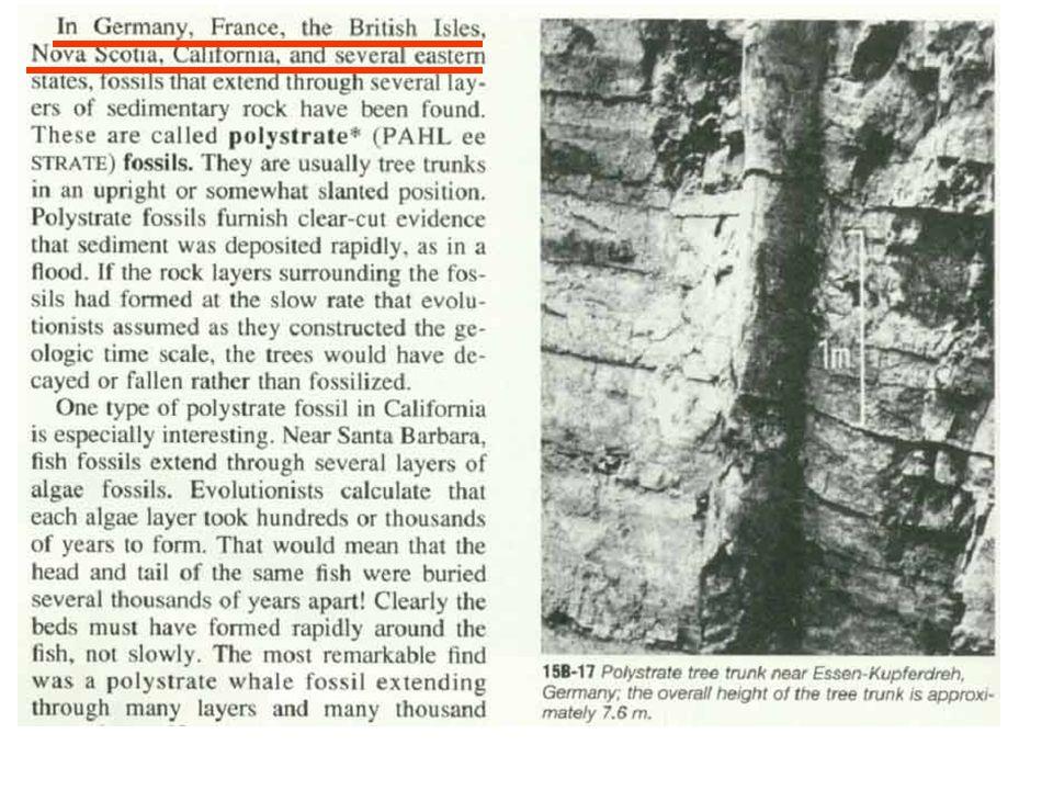 petrified tree running through rock layers (geologic enigmas )