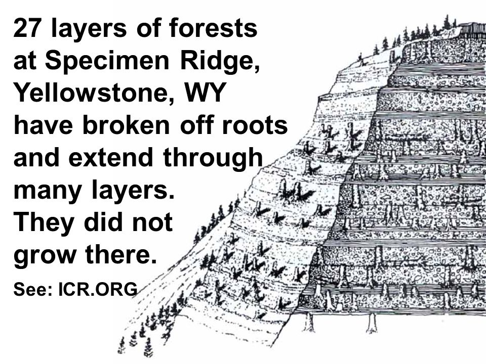 27 layers of forests at Specimen Ridge, Yellowstone, WY have broken off roots and extend through