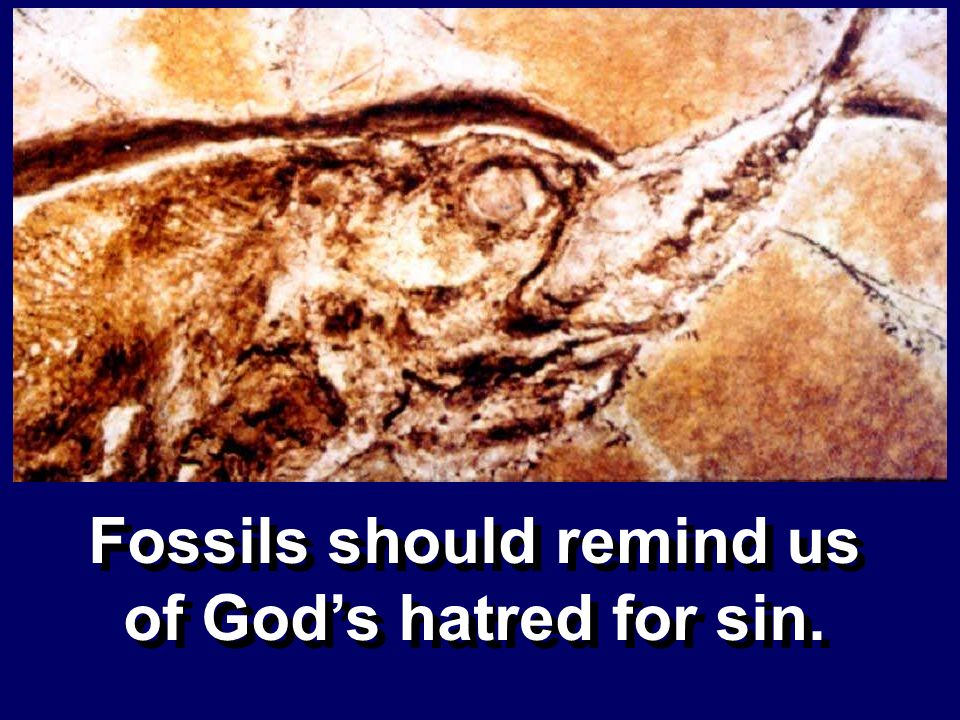 Fossils should remind us of God's hatred for sin.