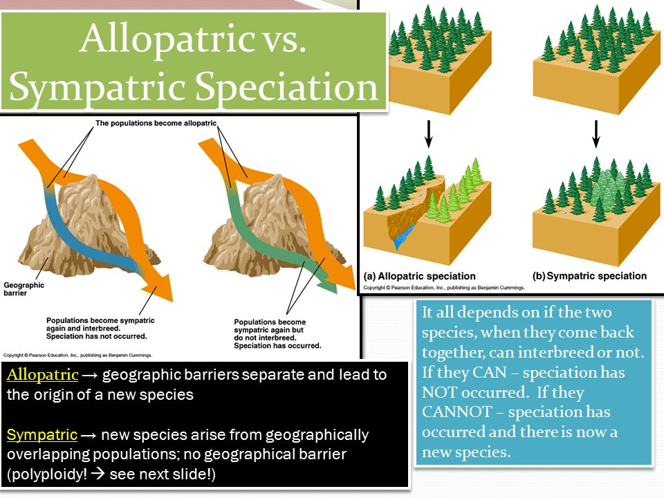 allopatric speciation and then sympatric speciation Sympatric means two populations or species are in the same geographic area, so they can encounter each other frequently allopatric means they're in different places.