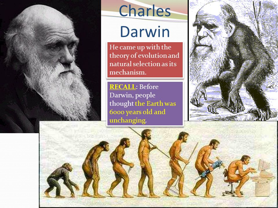 pre darwin theories Darwin's beagle diary--audio audio recording of excerpts from darwin's popular account of his voyage of exploration (copyright 2006 british broadcasting corporation) from the complete works of charles darwin online.