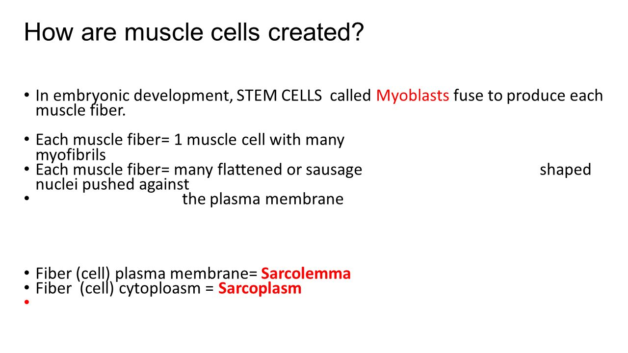 Anatomy of skeletal muscle ppt #1 Unit 4 Muscles - ppt video ...