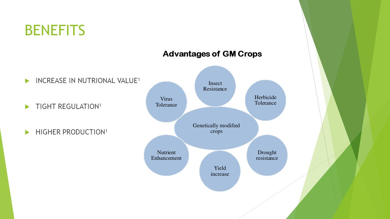 genetically modifying crops essay Genetically modified crops as the world's demand for food continues to increase plant breeders work to breed better yielding crop varieties they use a range of methods including conventional breeding, mutagenesis, genetic modification, and marker aided selection to breed new improved crop varieties.