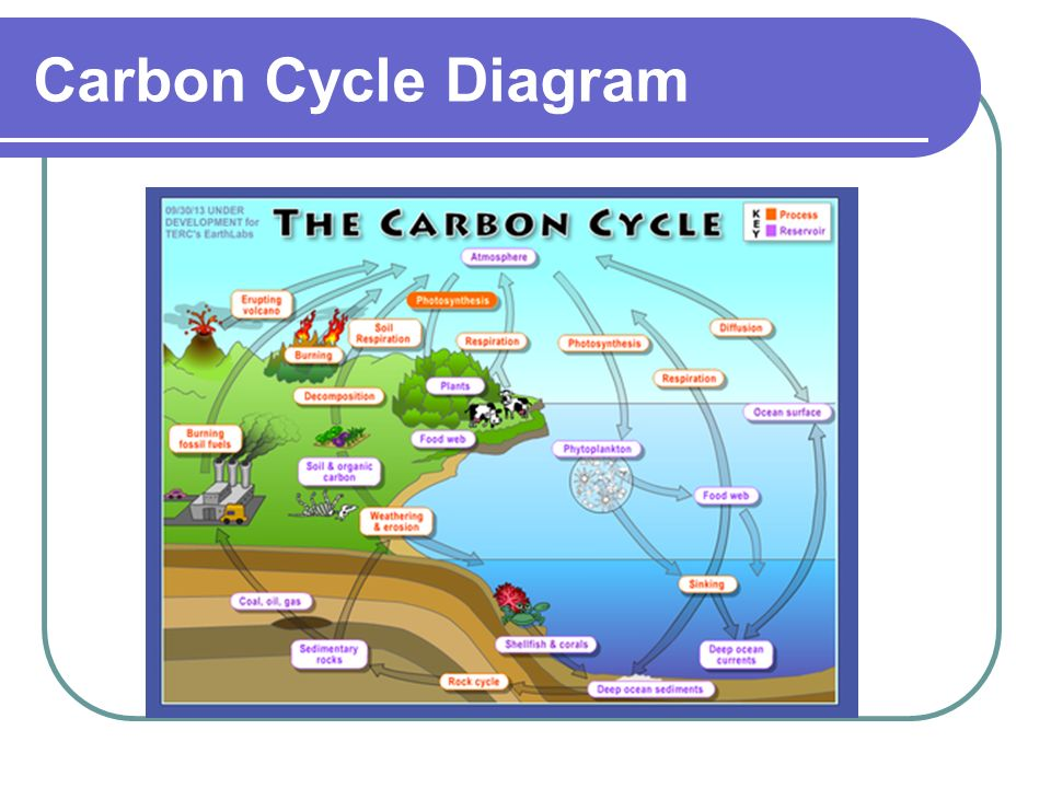 The carbon cycle ppt video online download 18 carbon cycle diagram ccuart Image collections