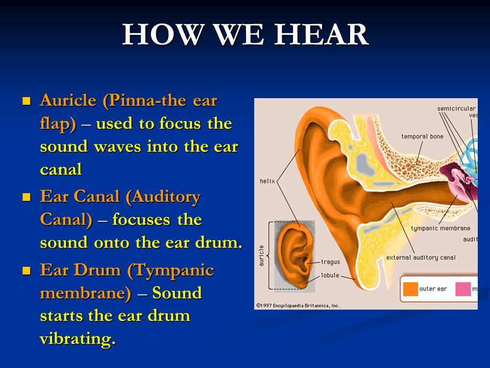 SAT VOCAB TWO Audible (adj.) able to be heard - ppt video ...
