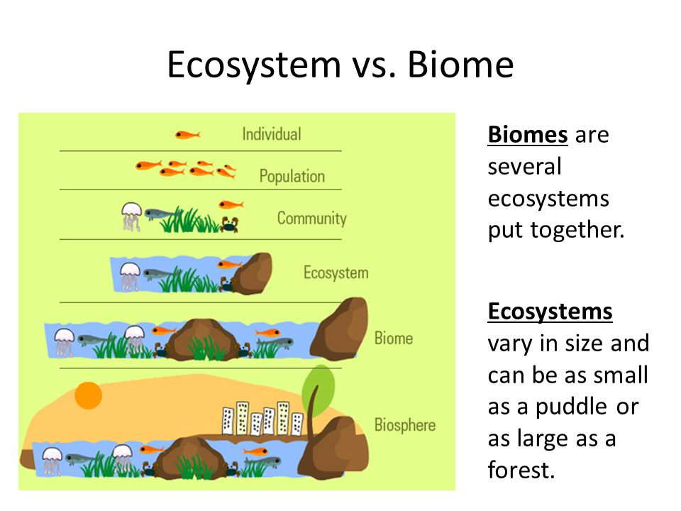 biome is a large ecosystem essay Location: the tundra biome is the coldest of all biomes it is also quite big the  tundra covers about one fifth of the land on earth the word tundra comes from.