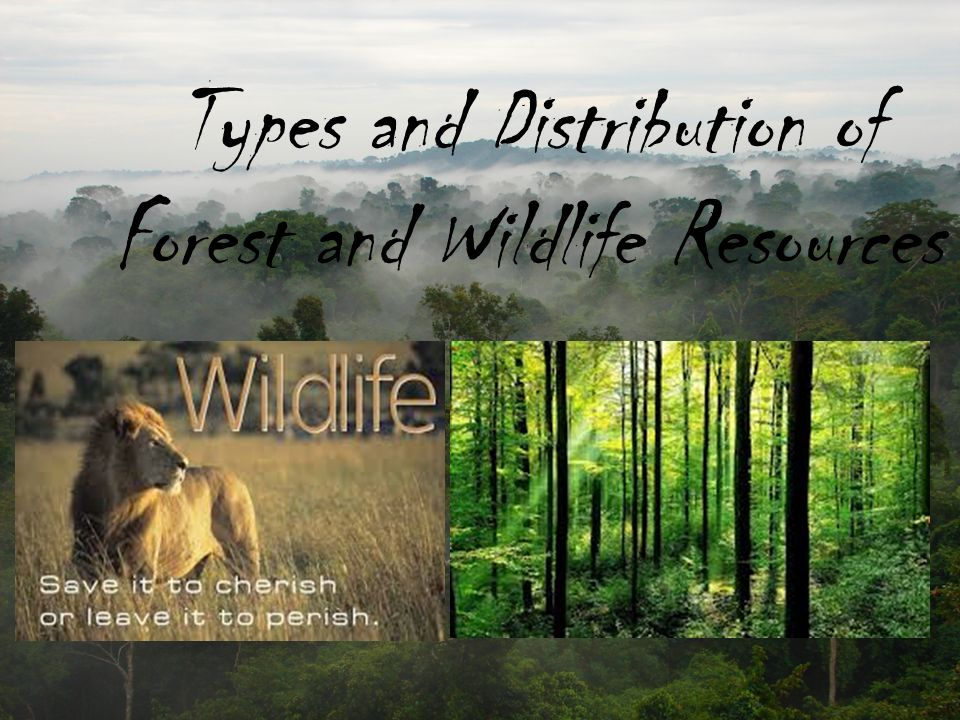 forest and wildlife resources Lastly, eco tourism around forests and wildlife sanctuaries, adventure sports, forest camps and trekking tours, housing schemes as getaways near these areas are also liable to damage forest habitat and disturb sensitive ecology of the forests.