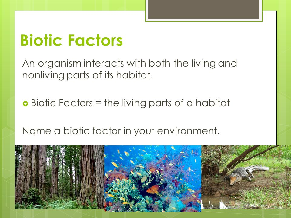 biotic factor of environment Free question bank for neet biology organism and environments environment  abiotic and biotic factors.