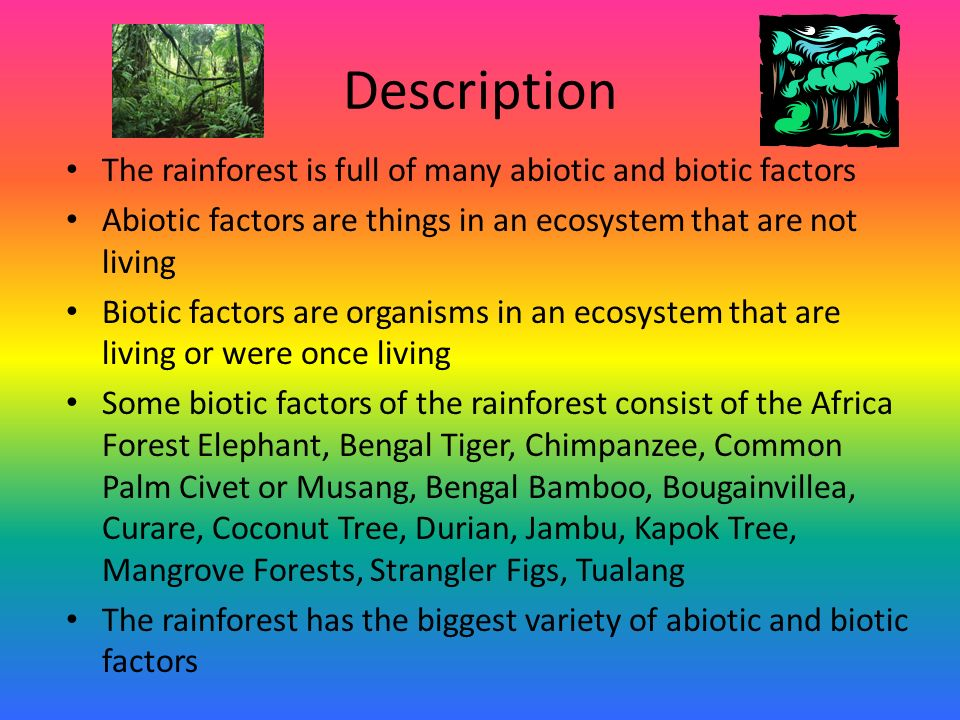 relationship of biotic and abiotic factors in a mangrove forest