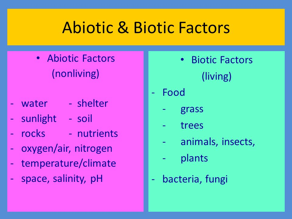 What Abiotic Factors Influence The Desert Biome Climate ...
