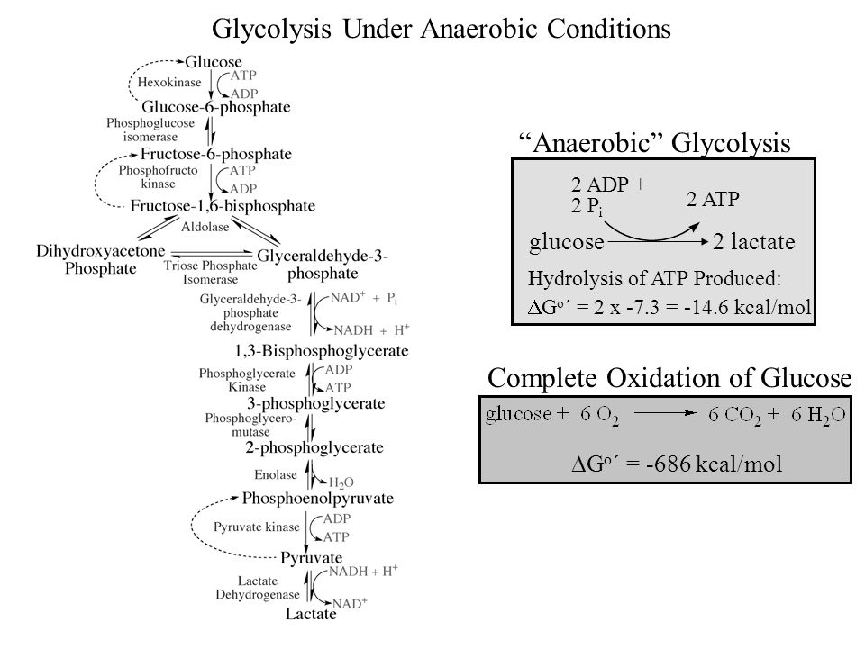 how to create anaerobic conditions