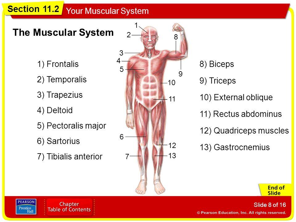 anabolic steroids weaken immune system