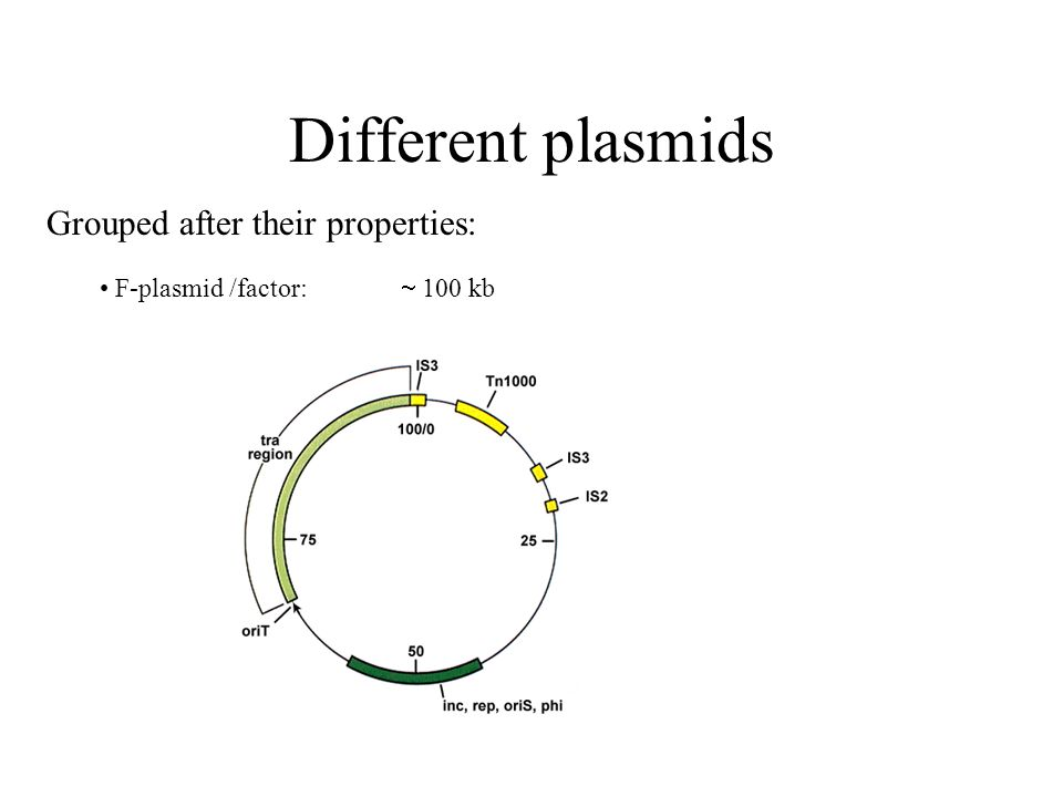 properties and uses of plasmids This is the end of the preview sign up to access the rest of the document unformatted text preview: today plasmid properties plasmid replication wednesday plasmid replication conjugation use of plasmids problem set 1 out friday first discussion paper problem set due = double stranded (ds.