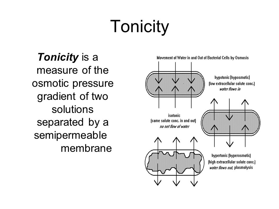 Copy and answer the following EQ into your science journal ppt – Tonicity and Osmosis Worksheet