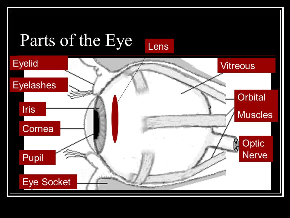 The Human Eye 6th Grade Science. - ppt video online download