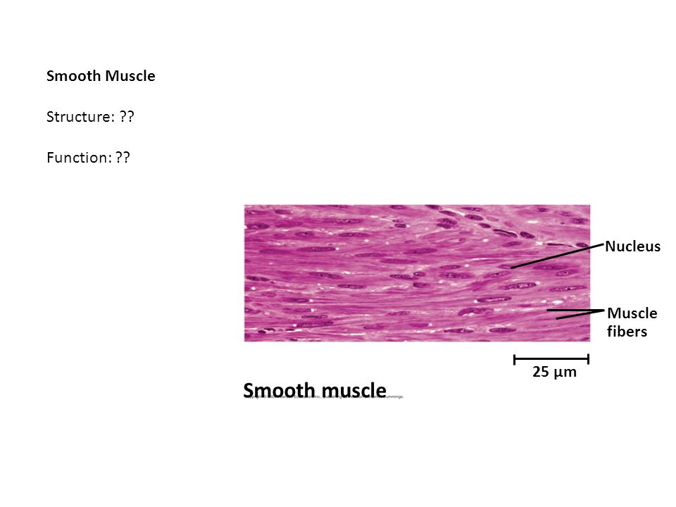 tissue structure and function - ppt video online download, Human Body