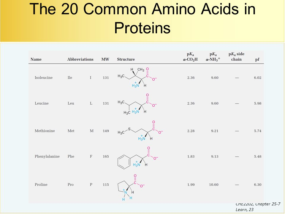 Chapters 25 7 biomolecules ppt download the 20 common amino acids in proteins thecheapjerseys Choice Image
