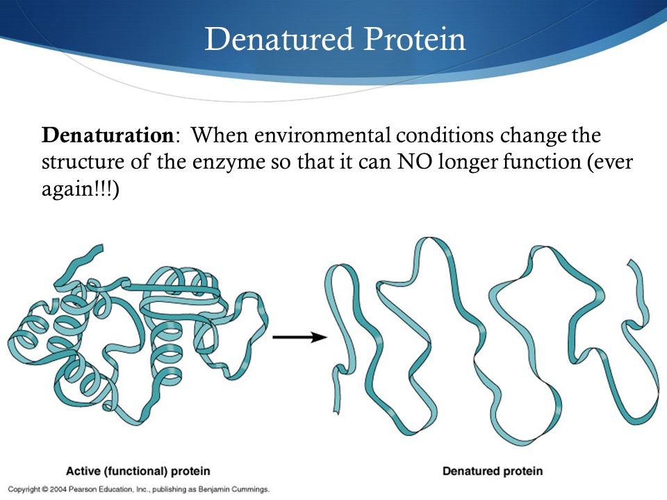 discovering factors affecting protein denaturation essay 31 questions and answers to learn proteins free review of protein structure and diversity, amino acids, peptide bond and denaturation.