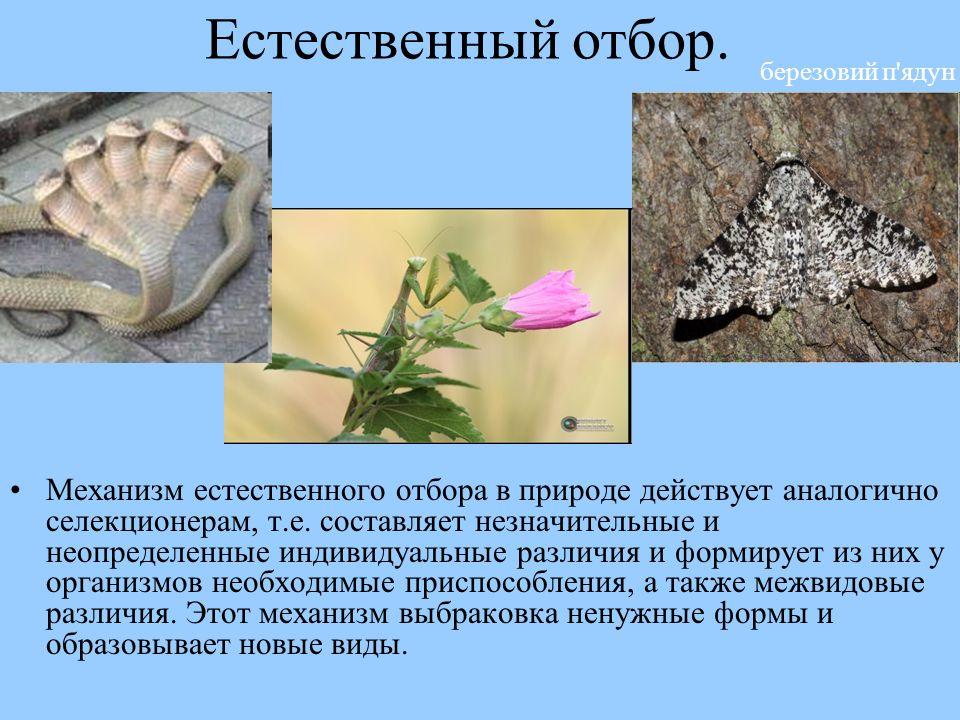 free identification