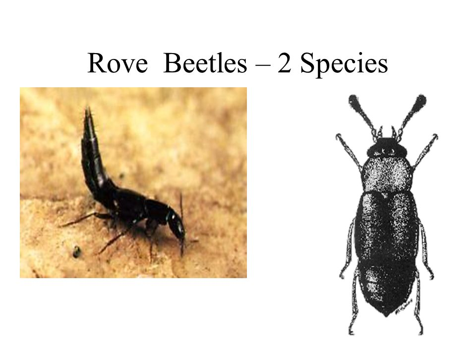 How Do Insects Determine Pmi Ppt Video Online Download