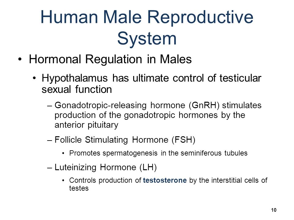 Biology sylvia s mader michael windelspecht ppt video online biology 9th ed sylvia mader 10 human male reproductive system fandeluxe Choice Image