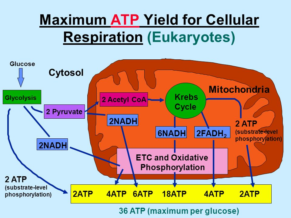 Cellular Respiration  Ppt Video Online Download. Tips For Moving Cross Country. Online Forensic Accounting Programs. Compare Cheap Insurance Moving Company Irvine. Comfort Inn And Suites Seaworld. Protecting Personal Data Ed S Degree Online. Stock Graphics Royalty Free Top Bank Rates. Accounting Software Real Estate. Marketing Project Management