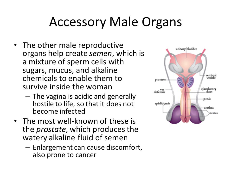 Ch 16 Reproductive Systems at Ohio University -