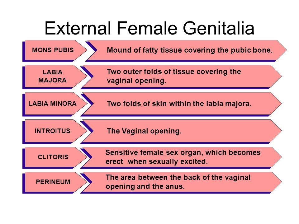 External Sex Organ 94