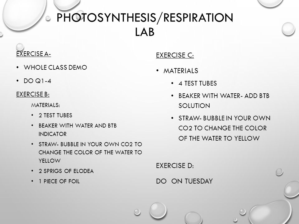 lab paq photosynthesis and respiration View lab report - photosynthesis respiration from bio 1081l at university of  cincinnati experiment photosynthesis and respiration hands-on labs, inc.