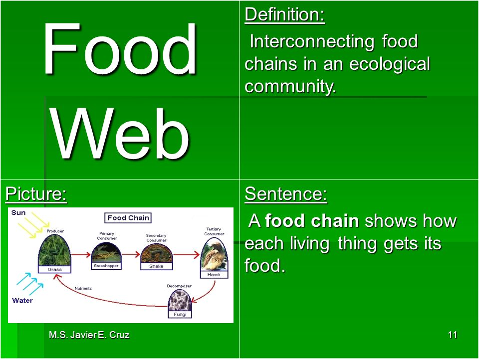 What is food web definition food ideas for Cuisine sentence