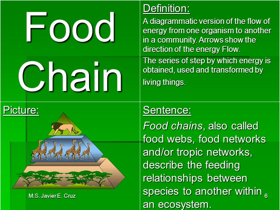 Food chain definition food ideas for Cuisine sentence