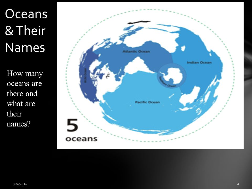 THE FOOD WEB DO NOW What Do You Think Is The Most Important Ppt - Number of oceans